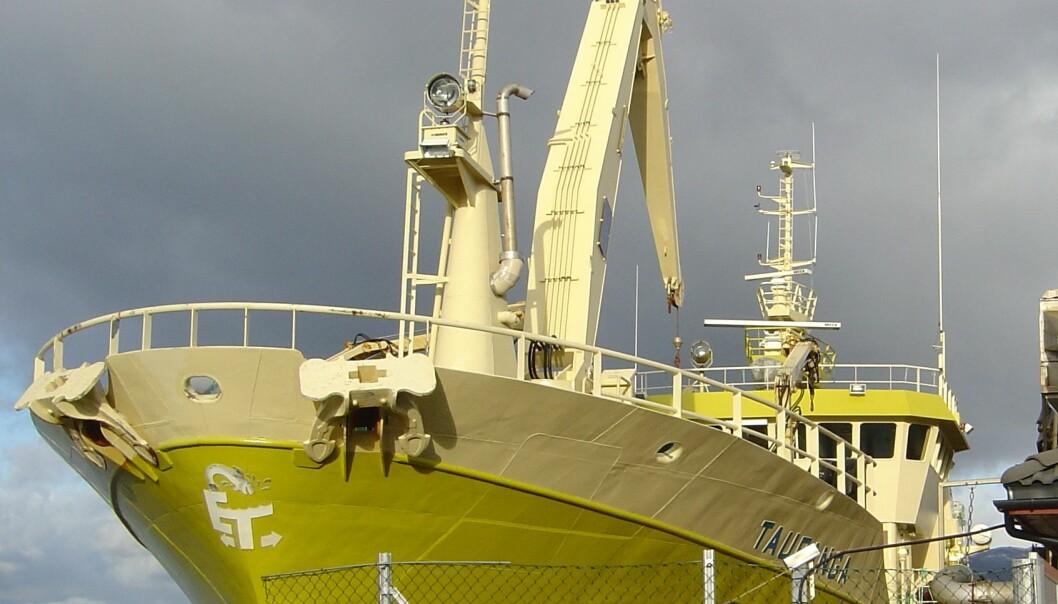 """""""M/S Tauranga"""", første fullskala prosessbåt for direkteslakting i Norge"""