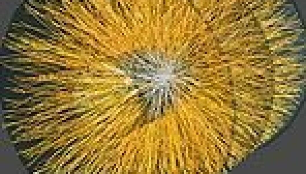Kopierte Big Bang