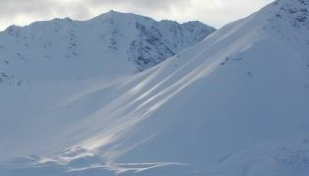 Sot kan være en vesentlig påvirkningsfaktor til klimaendringer i Arktis. (Foto: Richard Brandt)