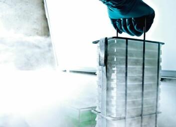 Noen tusen små gjærmutanter skal vekkes opp fra vinterdvalen på bunnen av en fryser, fôres med blant annet vann og sukker – og deretter behandles med cellegift. Hvem av dem vil overleve? Hvem vil dø? (Foto: Geir Mogen)