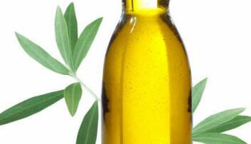 Olivenolje. (Foto: Colourbox.no)