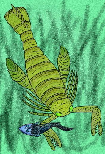 En kunstners ide av en sjøskorpion på jakt (slekten Acutiramus). (Illustrasjon: Stanton F. Fink/Wikipedia Commons)