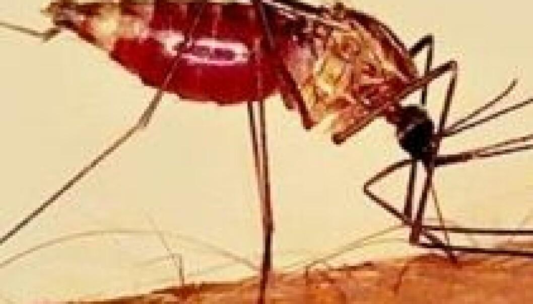 Malariamygg.