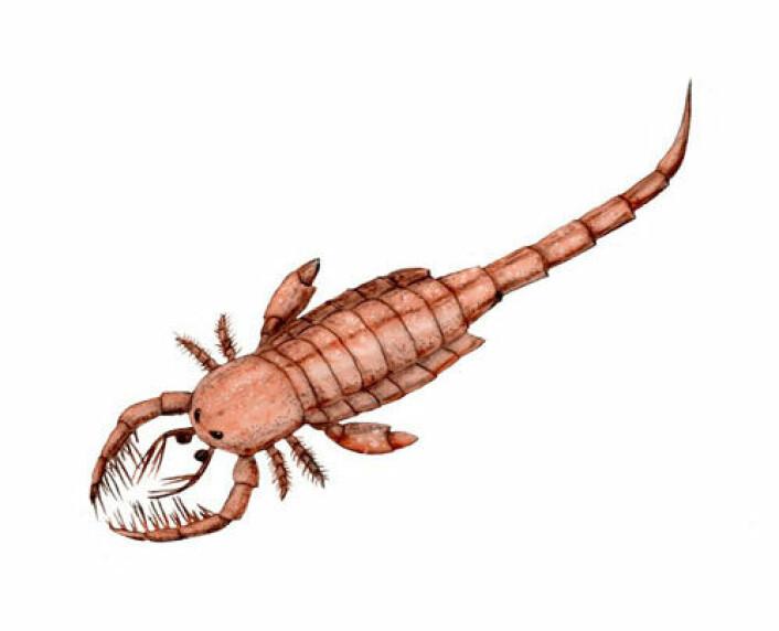 En kunstners framstilling av en sjøskorpion (slekten Mixopterus). (Illustrasjon: Nobu Tamura/Wikipedia Commons)
