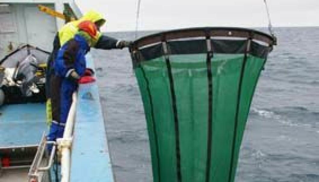 Anette Wold slipper ut et svært nett som kommer opp igjen med alger og plankton. (Foto: Bjørnar Kjensli)