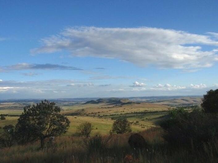 I dette området utenfor Johannesburg i Sør-Afrika ble det nye funnet av nærmennesker gjort. For to millioner år siden var det mer trær og færre dype daler i landskapet. (Foto: Paul Dirks)