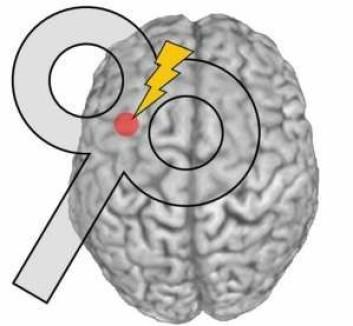 Prikken viser det lille området i hjernen som ble stimulert i forsøket. (Illustrasjon: videnskab.dk/Hartwig Siebner)