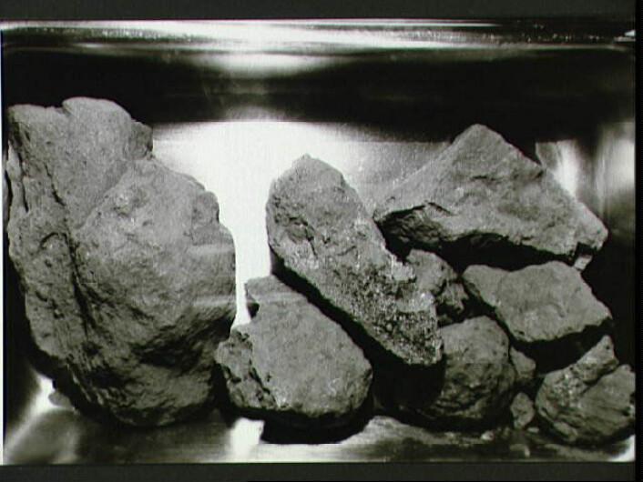 """""""Noen av månesteinene som astronautene tok med seg tilbake til jorda. Totalt tok de med seg over20 kilo månestein og støv tilbake. (Foto: NASA)"""""""