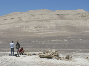 Her ble levningene av den utdødde spermhvalen Leviathan melvillei funnet, i ørkenen Pisco-Ica i Peru. (Foto: G. Bianucci, Universitá di Pisa)