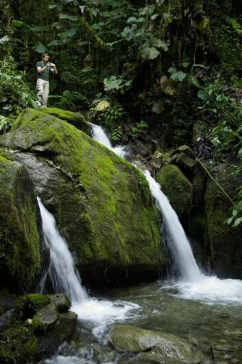 Idylliske omgivelser i skogen i området der den nye orkidé-arten ble funnet. (Foto: Lou Jost)