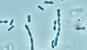 Bakterier spiser klimagass