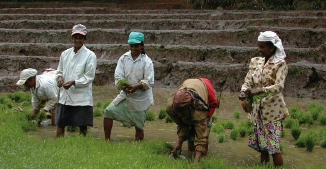 – Bøndenes rettigheter er sentrale for global matsikkerhet, sier Andersen. Foto: Utviklingsfondet