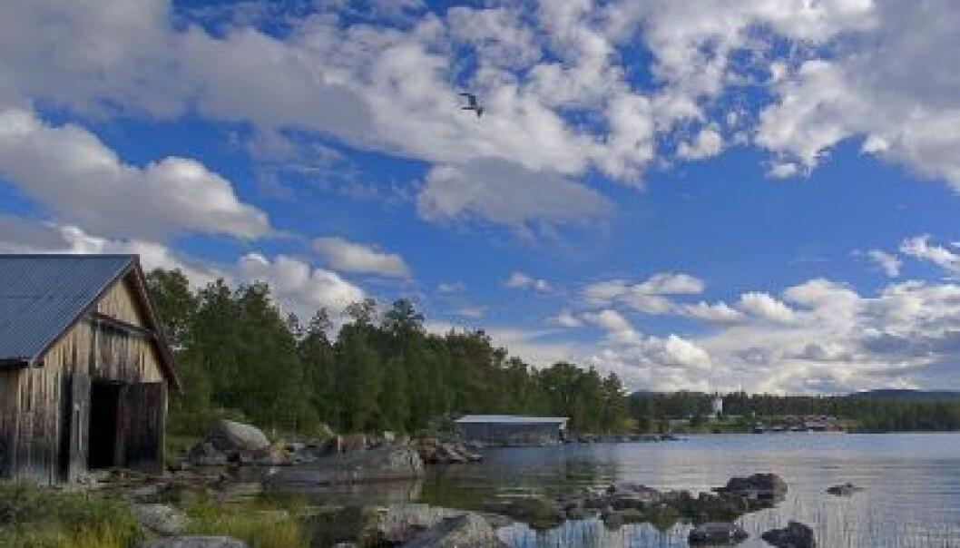 Økt nitrogennedfall fører paradoksalt nok ikke til økt vekst i norske innsjøer. Her et parti fra Femunden. (Foto: Erik Jørgensen/Innovasjon Norge)