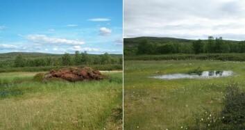 Palsmyr før og etter: Myrhaugen på det ene bildet har smeltet og etterlatt seg en liten dam. (Foto: Annika Hoffgaard)