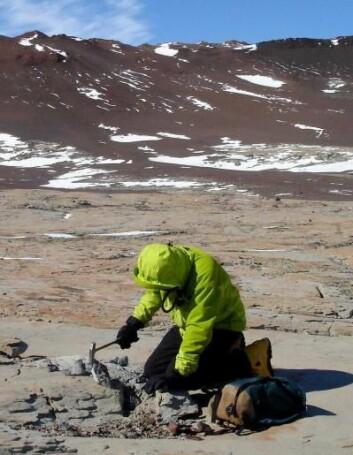 Christian Sidor fra University of Washington leter etter fossiler av firbeinte dyr - tetrapoder - i Allan Hills, sør i området Victoria Land i Antarktis, januar 2006.