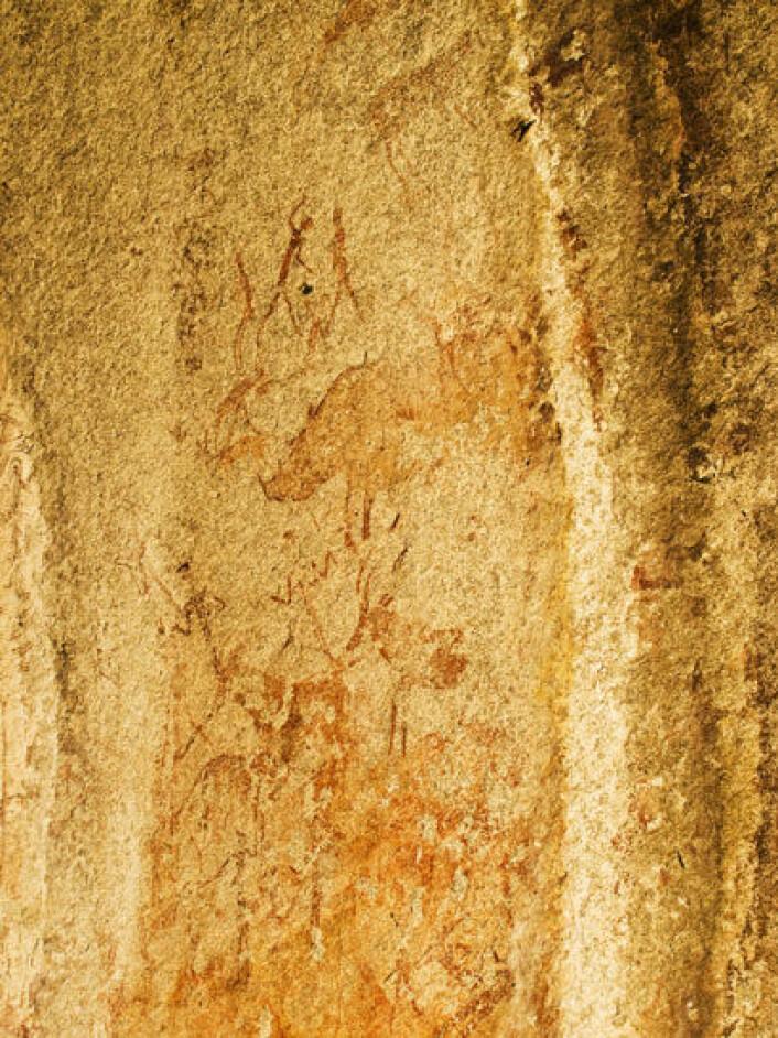 Måleri av afrikanske dyr laga av San-folk eller seinare jordbrukssamfunn. Helleristingar er vanskelege å datere. I teorien kan desse vere alt mellom 2000 og 28 000 år gamle. (Foto:Eivind Senneset)