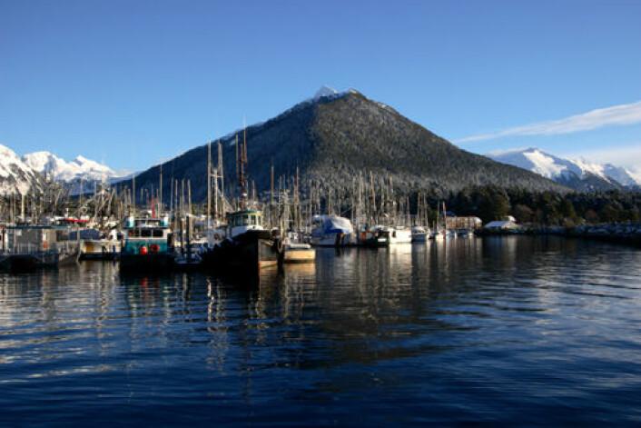 Nye toktresultater gir ikke godt nytt for en av verdens viktigste fiskebestander utenfor Alaska. Nedgangen kan gi bedre priser på norsk fisk. (Foto: iStockphoto)