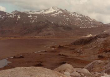 En av Kerguelenøyene i Antarktis hvor man satte ut reinsdyr. (Foto: Wikimedia Commons)