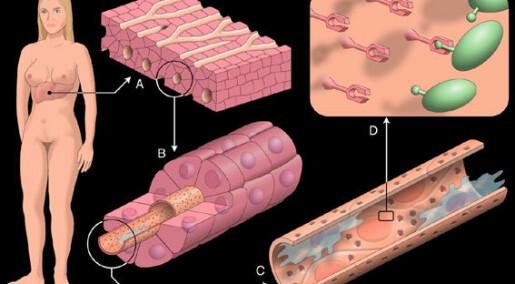 Cellenes Hellige Gral