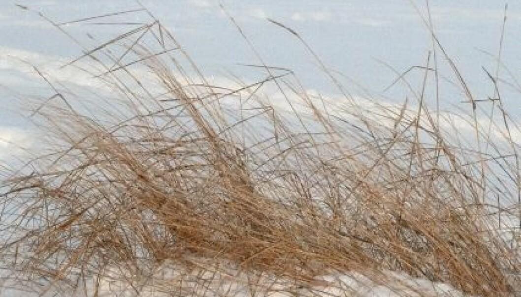 Kuldebølgen fortsetter – under bakken