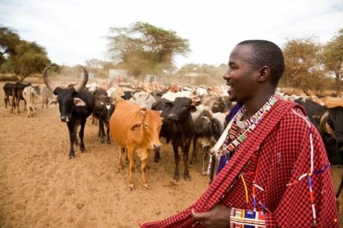Verdens rikeste lover å satse tungt på økt matproduksjon i fattige land. Masaiene i Øst-Afrika har lange tradisjoner for kvegdrift. Bilde fra Kenya. (Foto: iStockphoto)