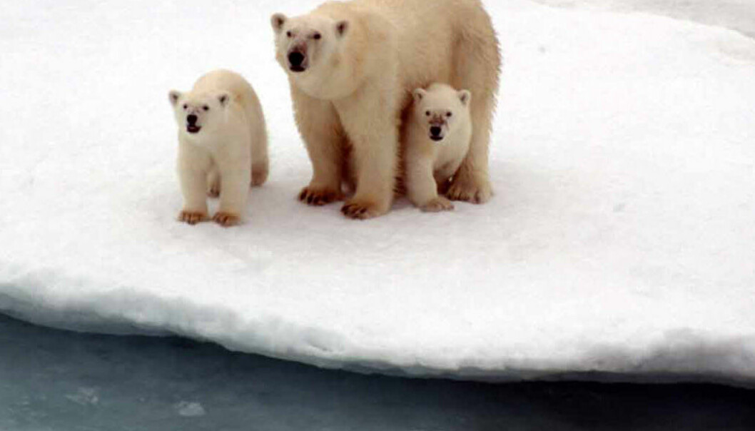 Badetemperatur på Nordpolen