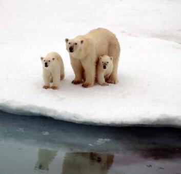 """""""Forskerne fikk besøk av nysgjerrige isbadere."""""""