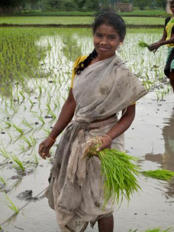 Feltarbeidet til ClimaRice-prosjektet forgår i Tanil Nadu, helt sør i India. (Foto: Ragnar Våga Pedersen)