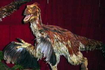 Rekonstruksjon av Deinonychus antirrhopus ved Royal Ontario Museum (Foto: Stephen Czerkas/Wikimedia Creative Commons)
