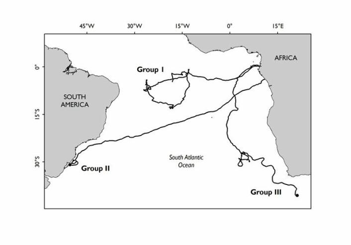 Hunnene hos havlærskilpaddene følger ulike vandringsmønstre etter å ha lagt egg i det sentralafrikanske landet Gabon. Én gruppe vandrer ut i Atlanterhavet ved ekvator og finner mat i dette området. En annen gruppe krysser havet og beiter ved kysten av Sør-Amerika. En tredje gruppe vandrer sørover langs det afrikanske kontinentet til kysten av Sør-Afrika. (Illustrasjon: Matthew Witt)