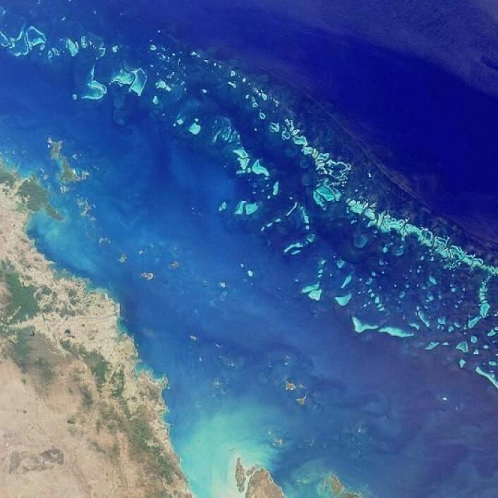 """""""Great Barrier Reef utenfor Australias østkyst er over 2000 kilometer langt og er verdens største enkeltstruktur av levende organismer. Foto: Wikipedia Commons"""""""