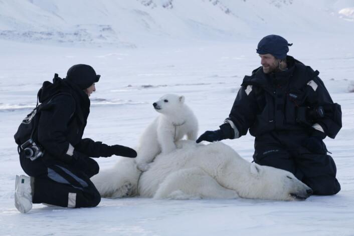 Silje-Kristin Jensen og Jon Aars merker isbjørn. (Foto: Magnus Andersen/Norsk Polarinstitutt)