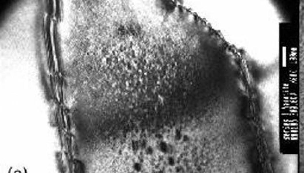 """""""Mikroskopbilde på nanonivå: Den sterke magnetismen finnes i grensesjiktet mellom mineralene hematitt og ilmenitt (til høyre på dette bildet)."""""""