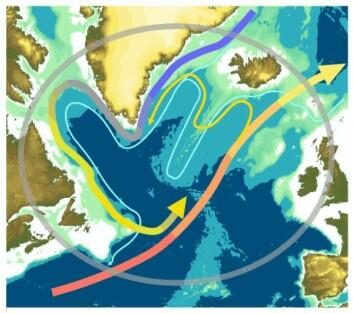 Den subpolare gyre er en havstrøm som i realiteten er satt sammen av fire andre havstrømmer: Øst-Grønland-strømmen (sørgående og kald), Vest-Grønland-strømmen, Labrador-strømmen og Den nordatlantiske strøm (en nordgående gren av Golfstrømmen). (Illustrasjon: National Oceanography Centre)