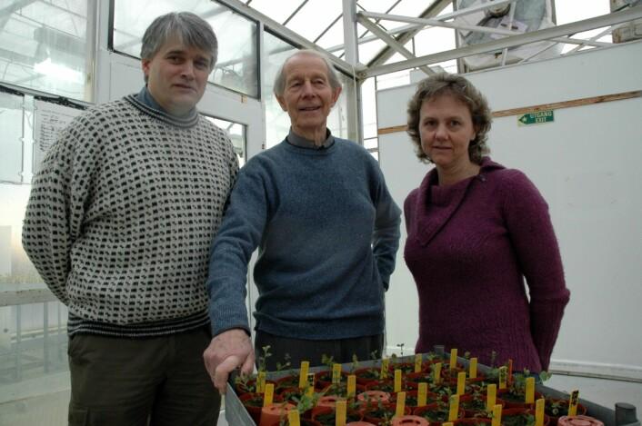 Arne Stensvand, Ola Heide og Anita Sønsteby.