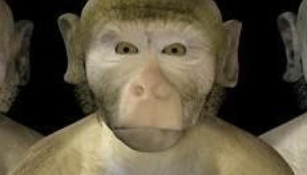 Aper friker også ut