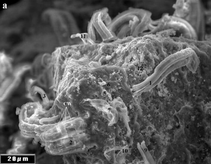 Struktur fra meteoritt som kan stamme fra utenomjordisk liv, ifølge Richard Hoover. (Foto: Richard Hoover/Journal of Cosmology)