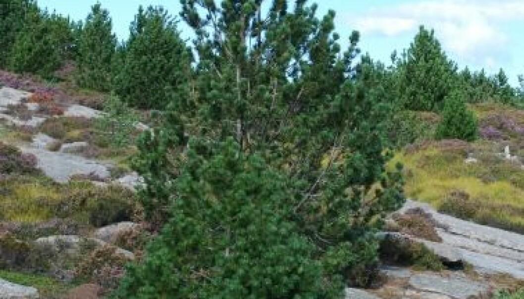 Ny barskog truer