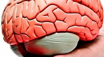 Hjernen tar gjerne hovedrollen