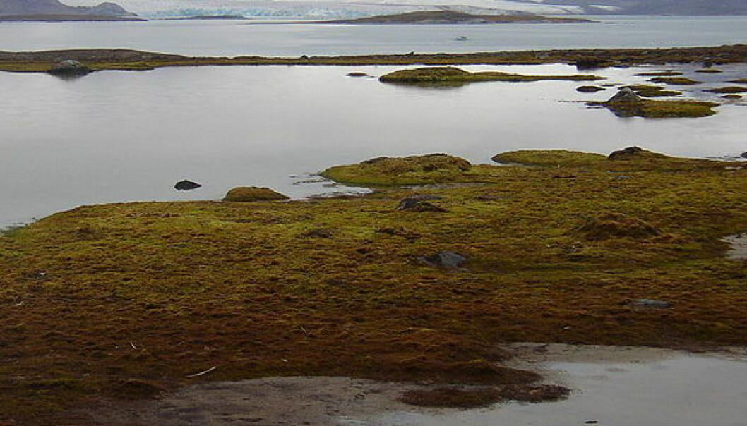 Kongsfjorden fra Blomstrandhalvøya ved Spitsbergen, Svalbard. (Foto: Wikimedia Commons, se lisens her)