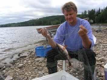 NIVA-forsker Sigurd Rognerud på feltarbeid. (Foto: Eirik Fjeld/NIVA)