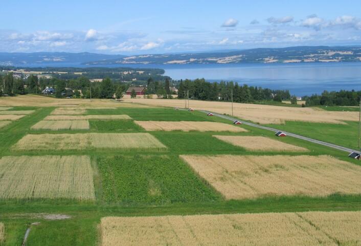 """""""Her er """"gårdene"""" på Apelsvoll. I de små røde husene samles det opp vann som renner av på overflaten og i grøftene, slik at nitrogenavrenning kan måles. (Foto: Bioforsk Øst)"""""""