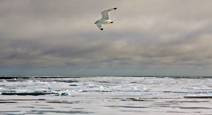 """""""Allerede fra Nansens reiser var det kjent at vinden hadde betydning for mengden is i Framstredet. Nå har japanske forskere vist en sammenheng mellom årlige vindvariasjoner og issmelting. (Foto: Bjørnar Kjensli)"""""""