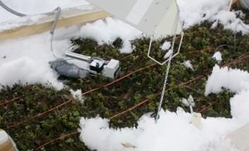 Varmelamper har smeltet bort snøen, og vegetasjonen titter fram. Del av varmelampe vises øverst i bildet. Ulike måleinstrumenter vises også. (Foto: Jarle W. Bjerke)