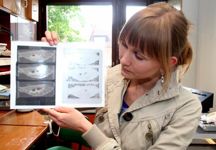 Røntgenfoto av fisk brukes også i forskningsarbeidet. Fisk har sentre i hjernen som tar i imot signaler om skadelige stimuli, men fiskehjernen er annerledes konstruert enn pattedyras, forklarer Nordgreen. (Foto: Asle Rønning)
