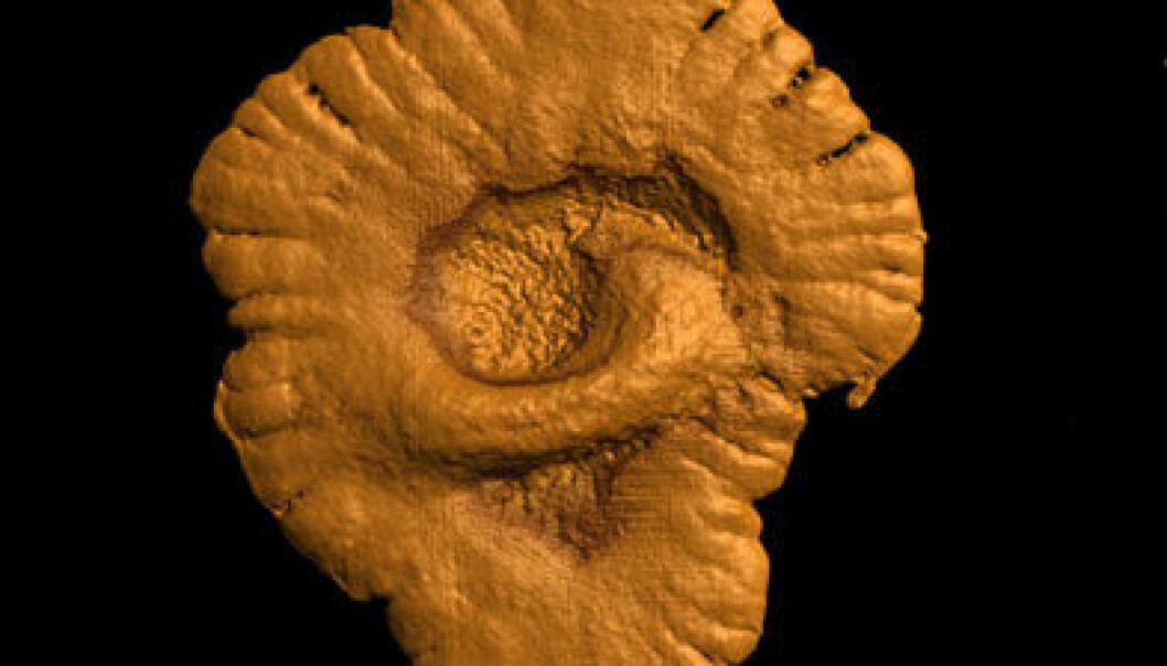 Fossilene har opprinnelig vært en form for koloni av celler, som har hatt en innbyrdes arbeidsdeling. De som befant seg langs kanten har utført andre oppgaver enn de som var i midten. (Foto: CNRS Photothèque / A. El Albani & A. Mazurier)