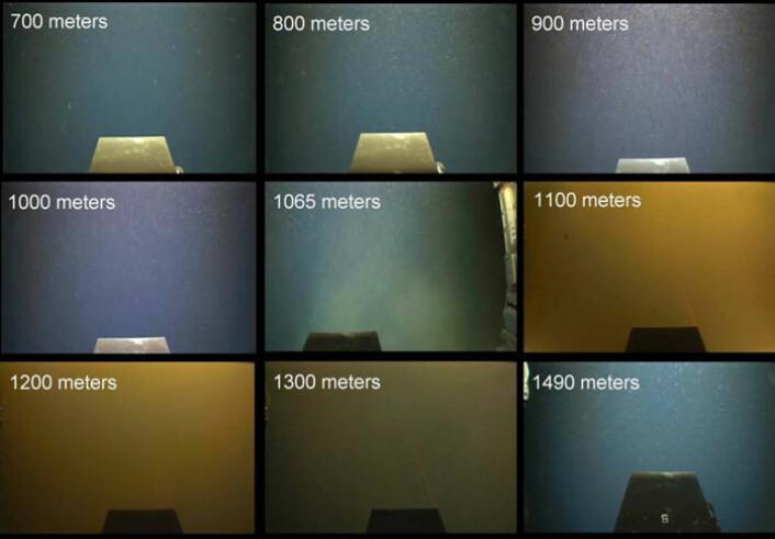Bilder tatt på veien nedover i vannmassene, mindre enn 500 meter sørvest for brønnen, 1. juni 2010. det er et tydelig grumsete belte mellom 1065 og 1300 meters dyp, hvor oljedråper midlertidig samler seg på kameralinsen. (Foto: R. Camilli, Woods Hole Oceanographic Institution)