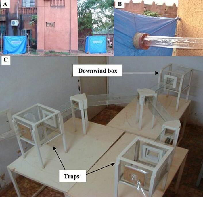 Slik var forsøket konstruert: Luften fra to telt ble ført inn til myggene. (Foto: Thierry Lefèvre et al)