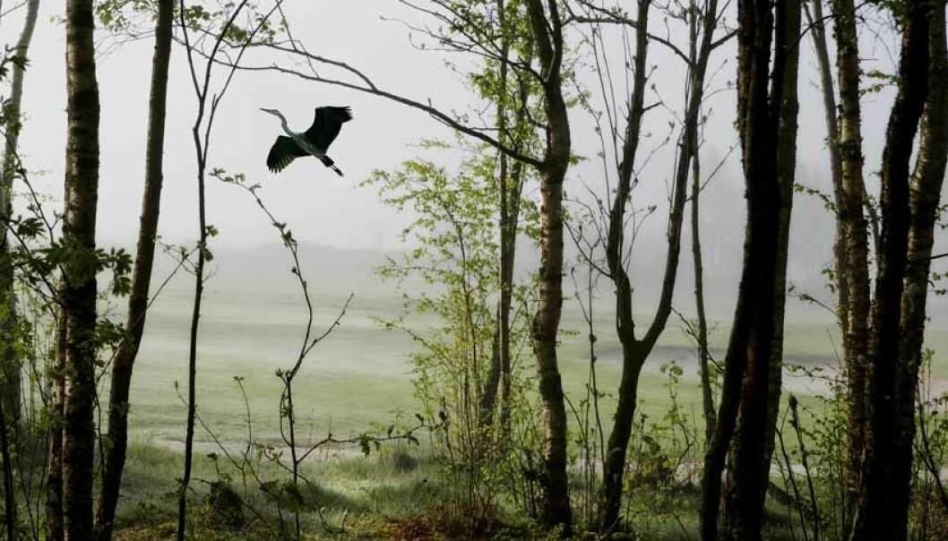 I nordisk folketru var utburd ei slags skogsånd som viste seg på den staden der eit barn hadde vorte drepe og bore ut til. Folk frykta desse stadene kor barnet kunne vise seg fram som for eksempel ein fugl. (Foto: Elisabeth Tønnessen)