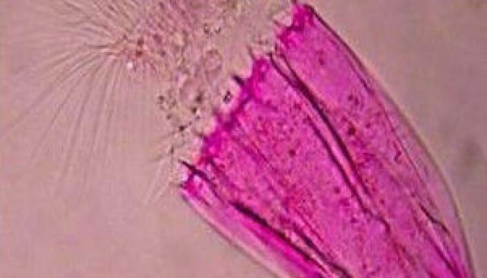 Havdyr lever uten oksygen